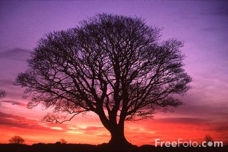 Time to Take OUT the Garbage! (4/4)
