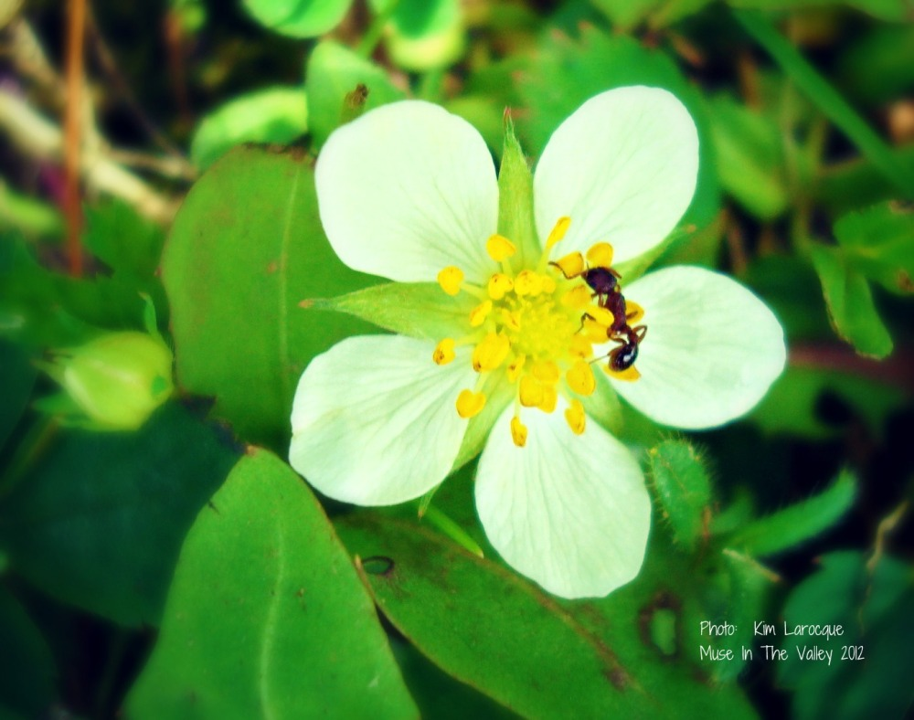 Finding Creativity in Nature's Details  (1/2)