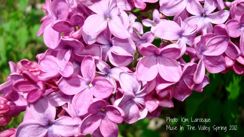 Finding Creativity in Nature's Details  (2/2)